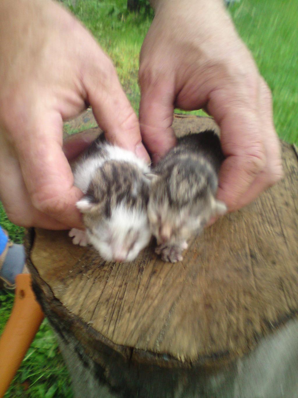 Kleine babykatzen zu verkaufen - Bilder verschenken ...